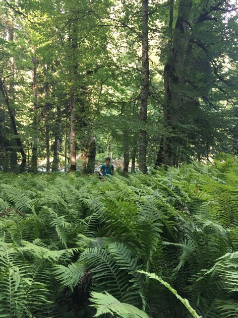 Отчет о походе Пслух - Озеро Голубое - Роза Пик